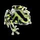 Poison-Dart-Frog-Hi-Res